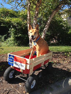 Tallie and her BuildASign-made wagon plate. Tallie was diagnosed with a type of cancer and was given only a few short weeks to live and has been having trouble walking. Our CLT team rushed her order so Tallie could cruise around in style.